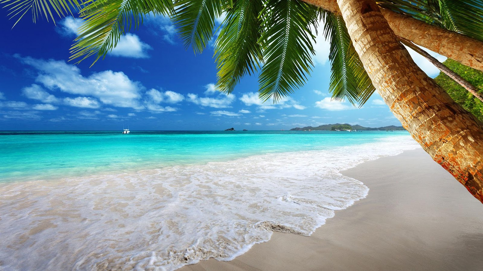Tropical Beach, Palm Trees