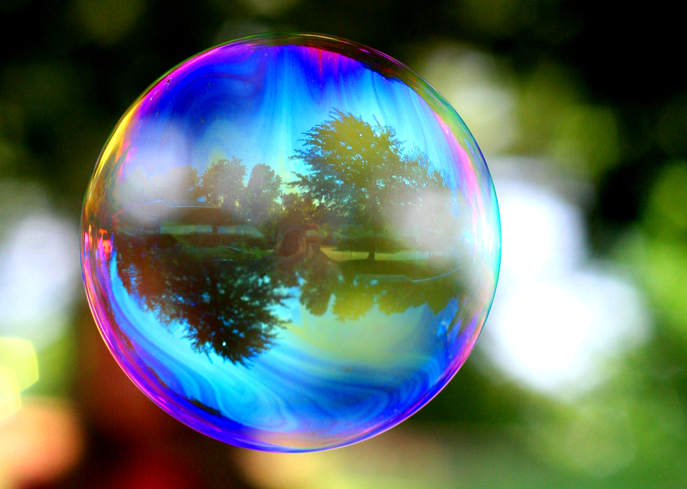 Trees Reflected in a Soap Bubble 476.56 Kb