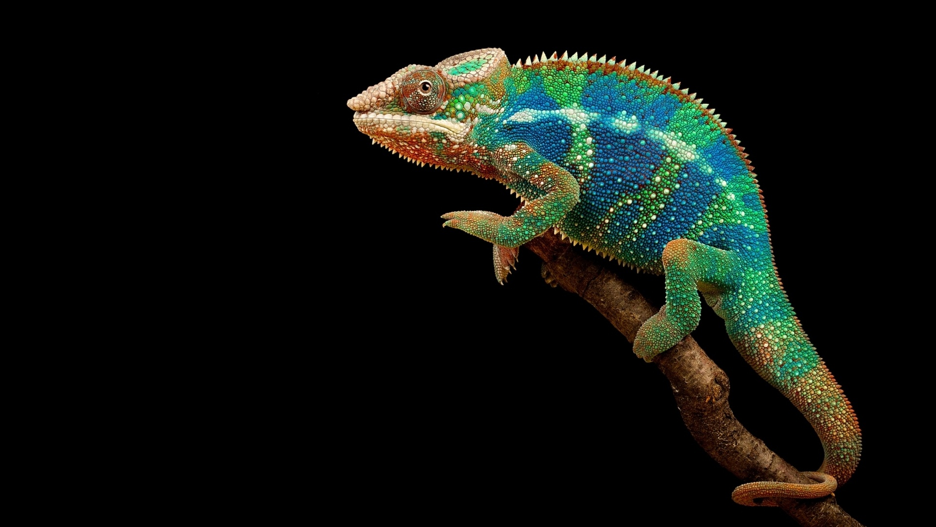 chameleon wallpaper 1920x1200 - photo #28