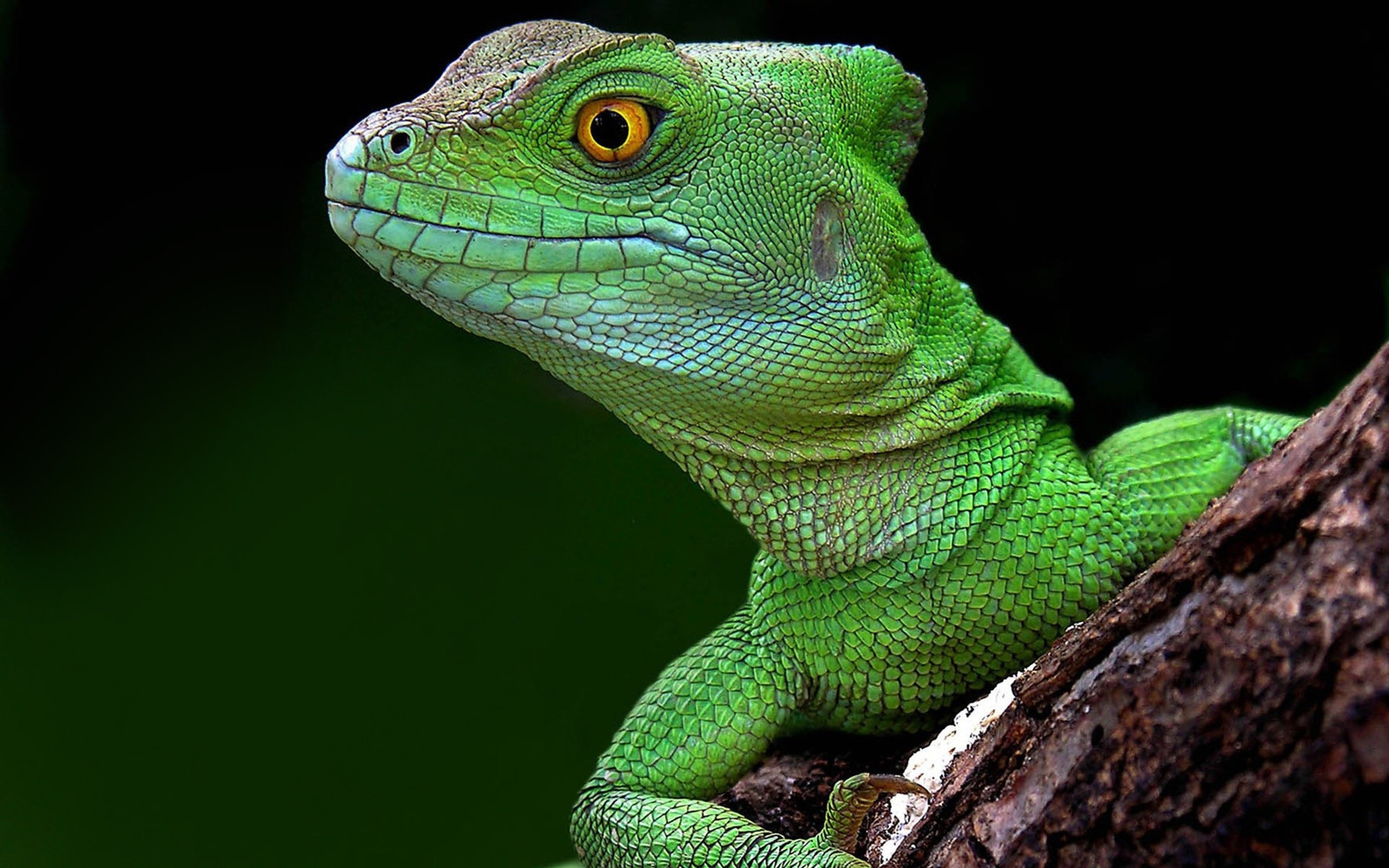 Green Lizard Head 783.34 Kb