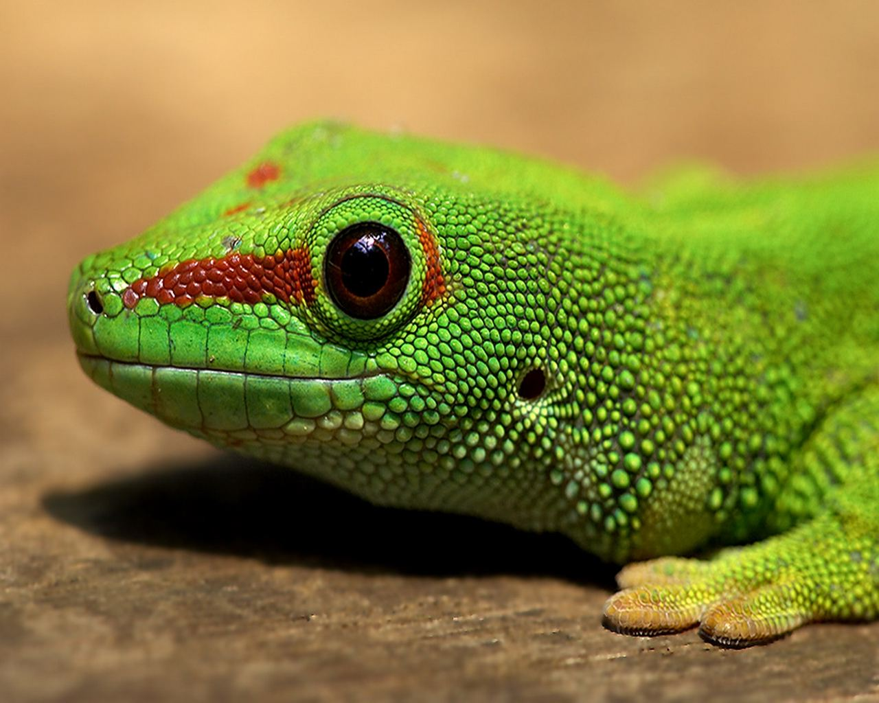 Green Lizard Big Eye 783.34 Kb