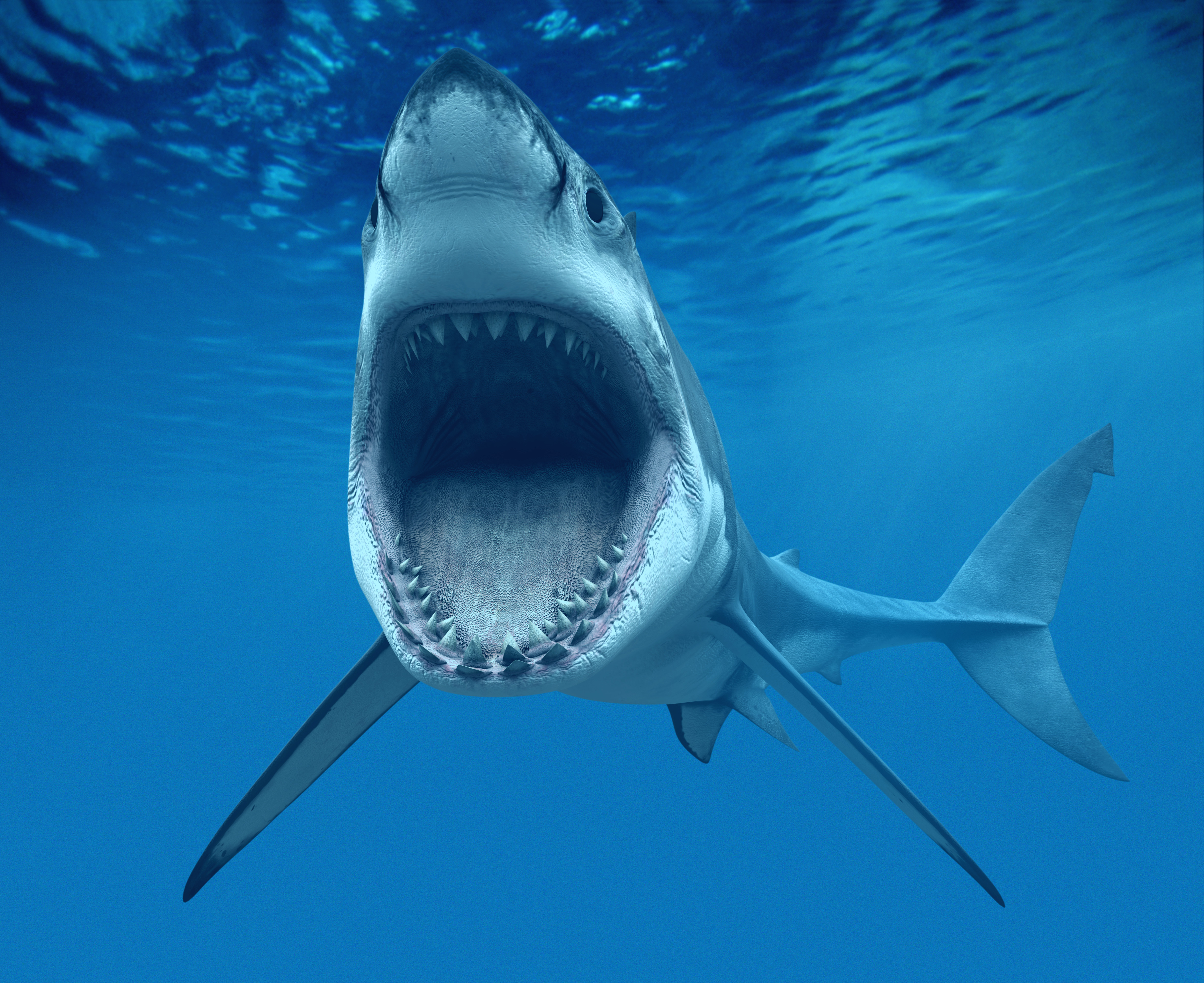 Shark Sharp Teeth