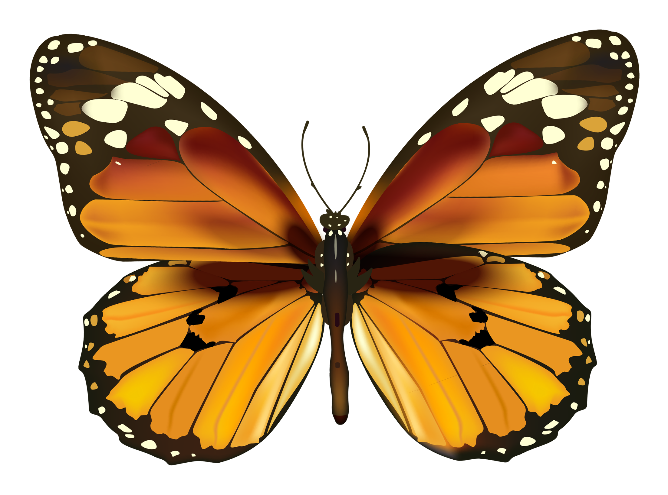 Drawn Butterfly Image 350.91 Kb