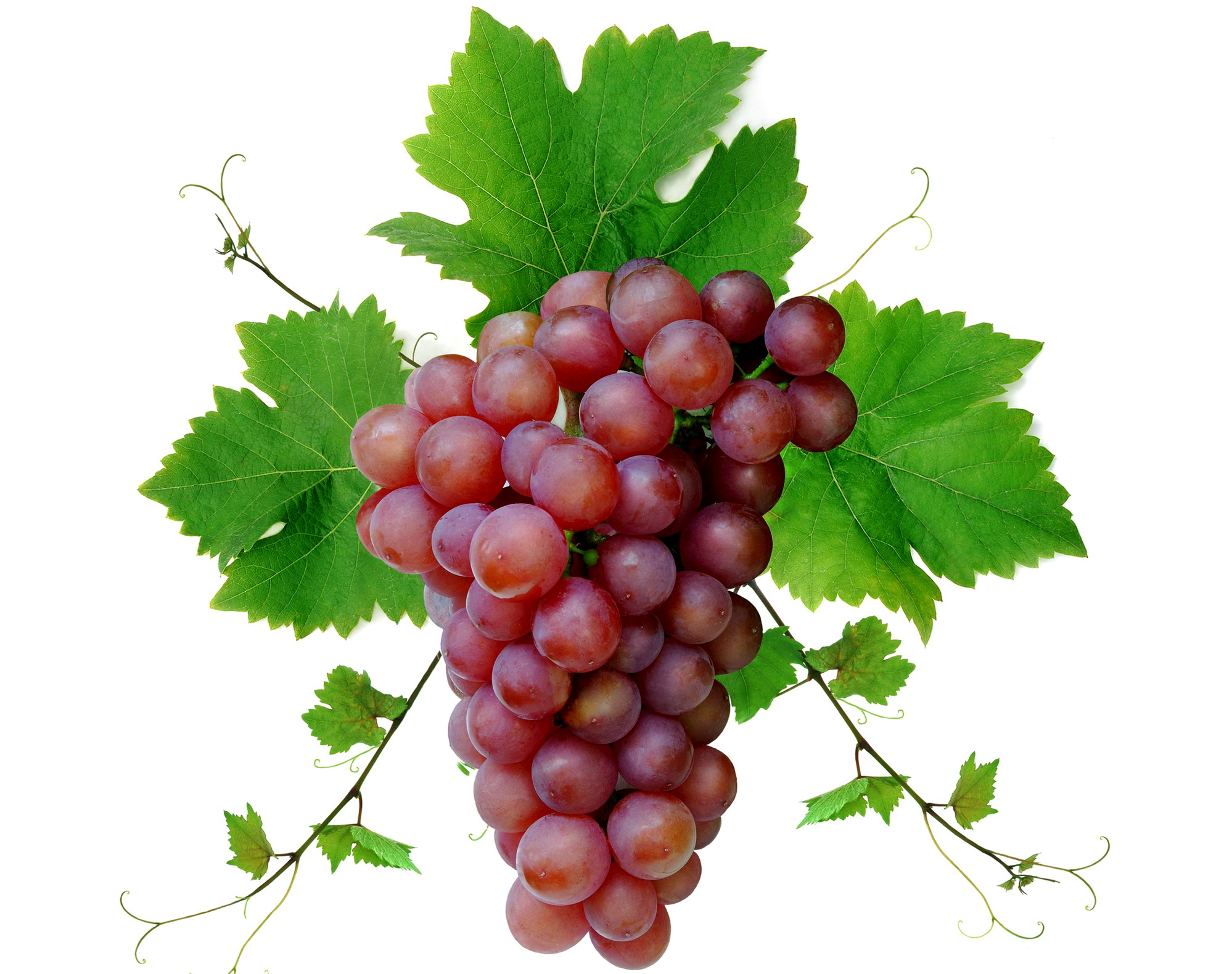 Ripe Grapes Racemation 822.8 Kb