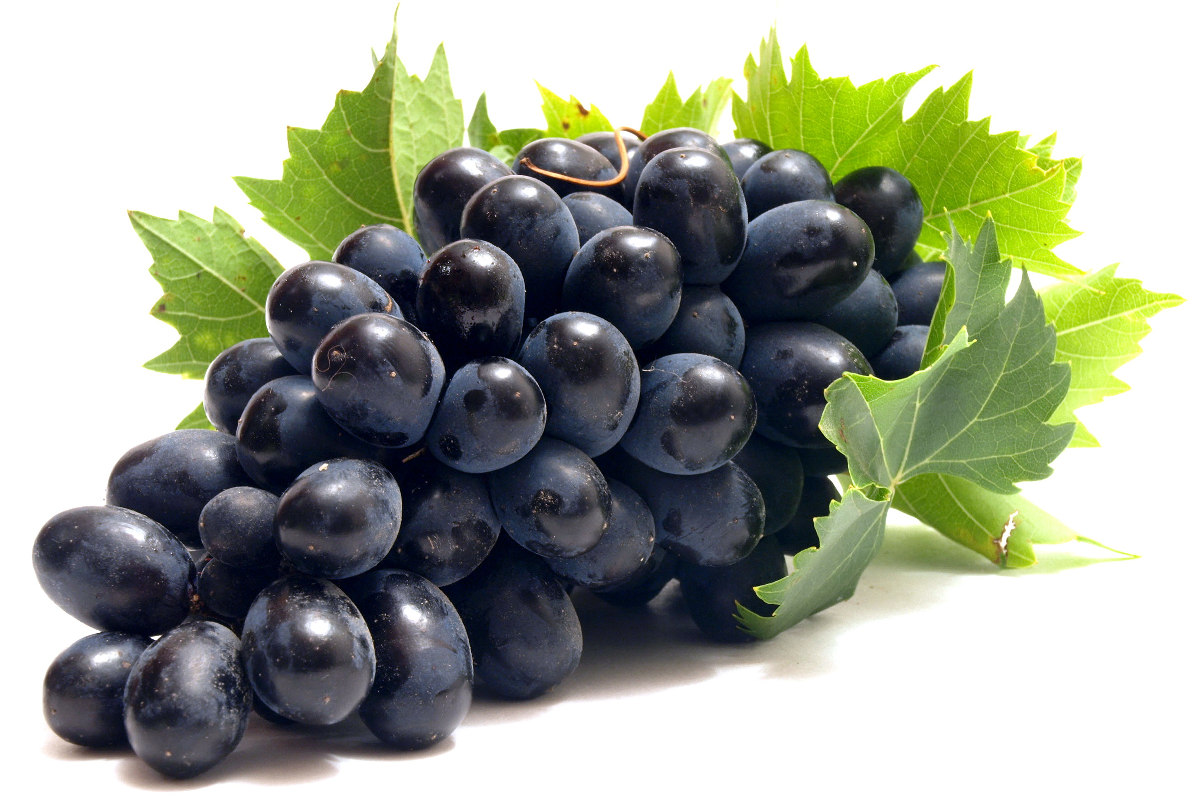 Ripe Purple Grapes 134.7 Kb