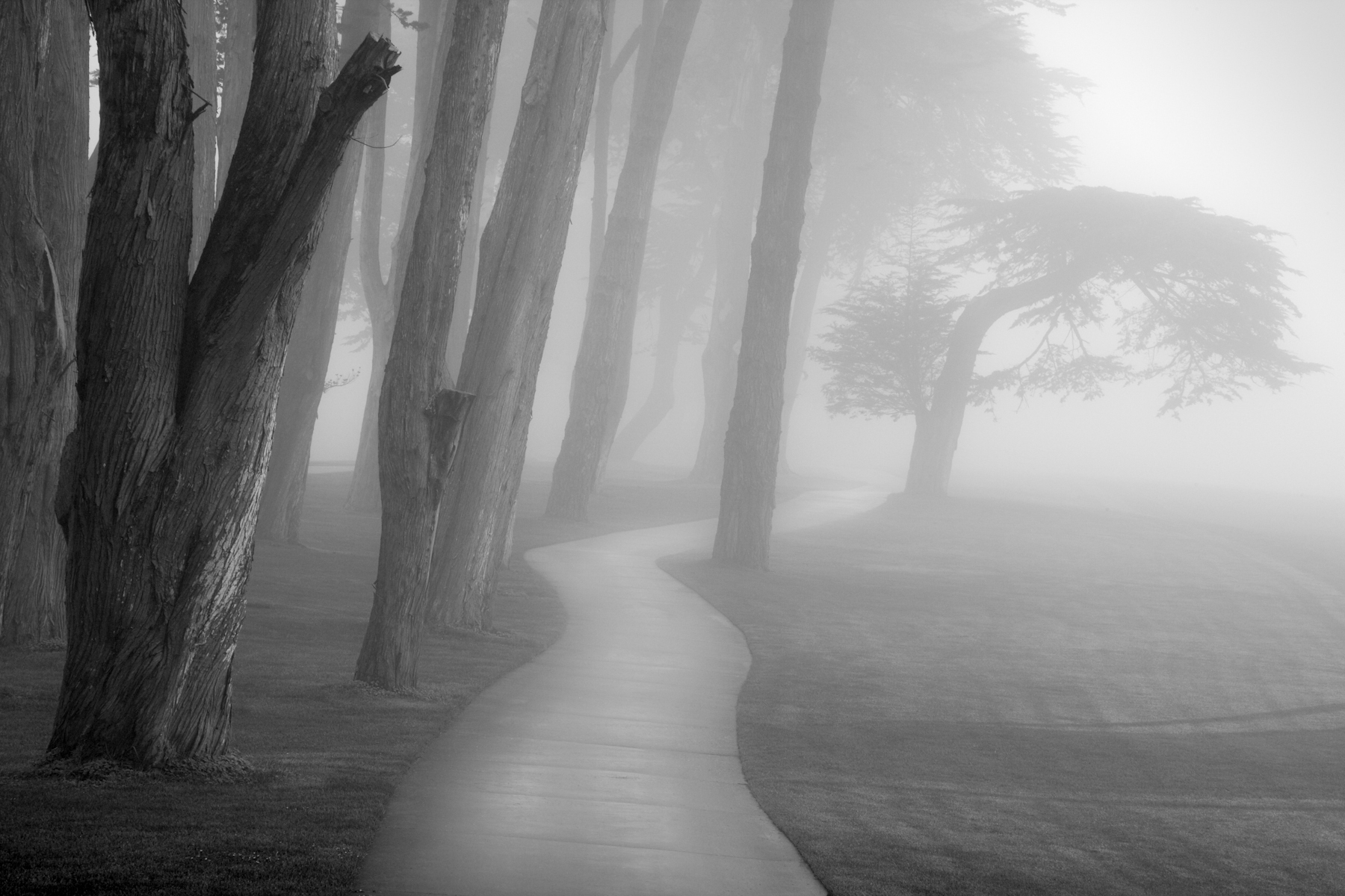 Think Fog in a Park