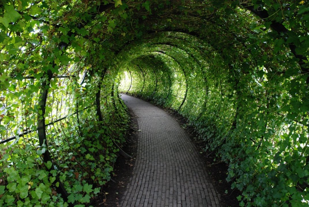 Green Garden Tunnel 2972.77 Kb
