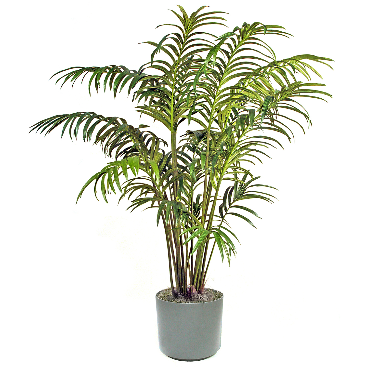 Palm Tree Decorative Plant 460.28 Kb