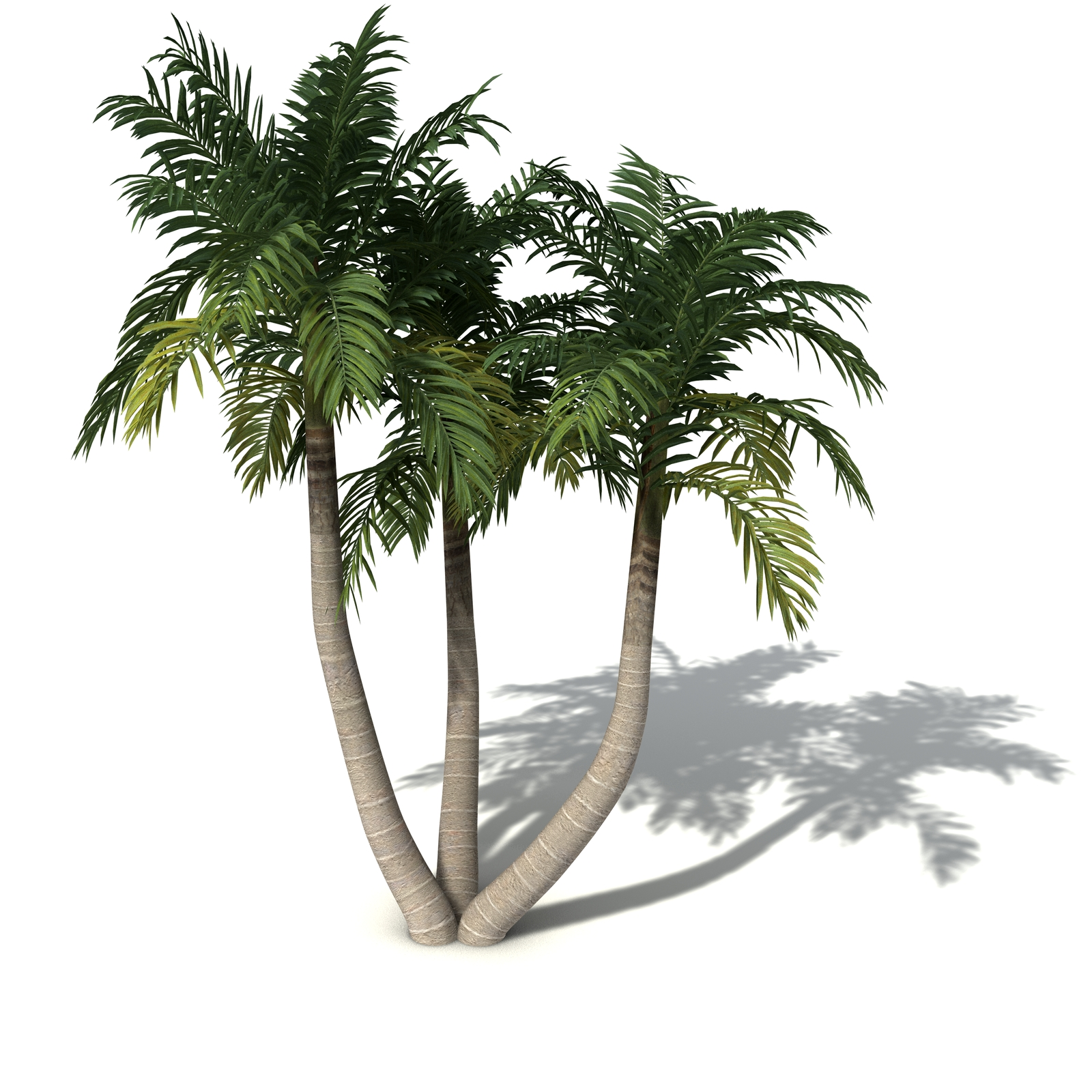 Palm Tree Trio 160.44 Kb