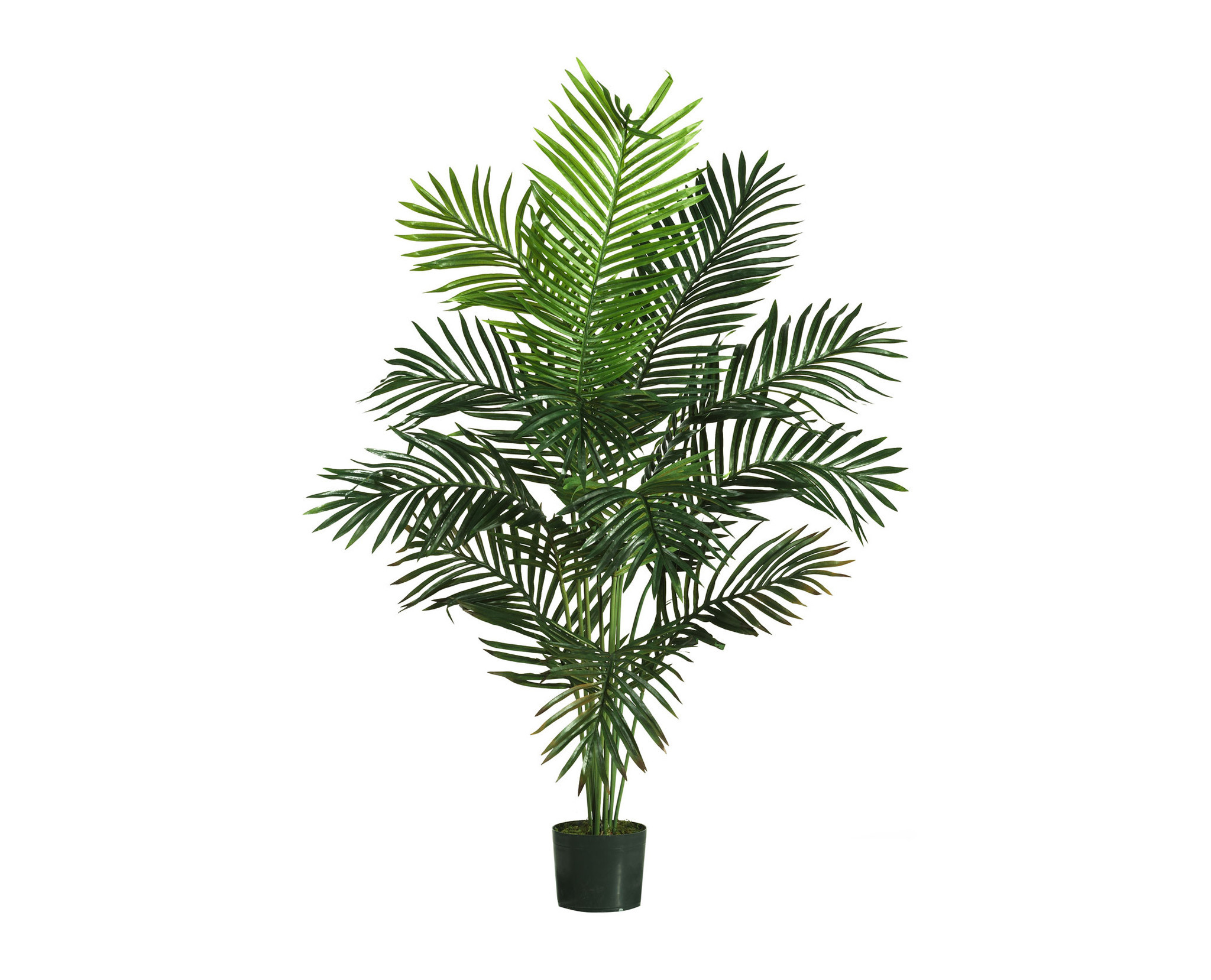 Palm Plant in a Pot 460.28 Kb