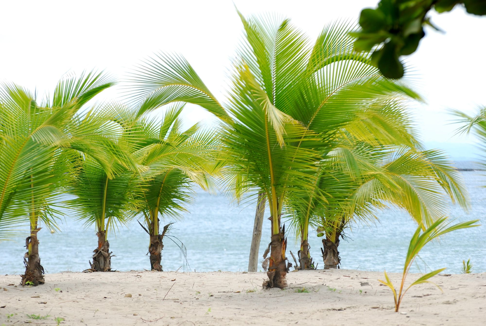 Small Palm Trees on a Beach