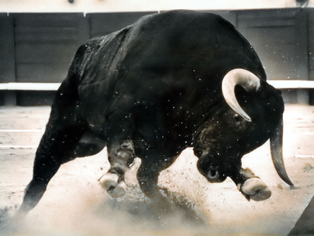 Strong Bull Fight 786.85 Kb