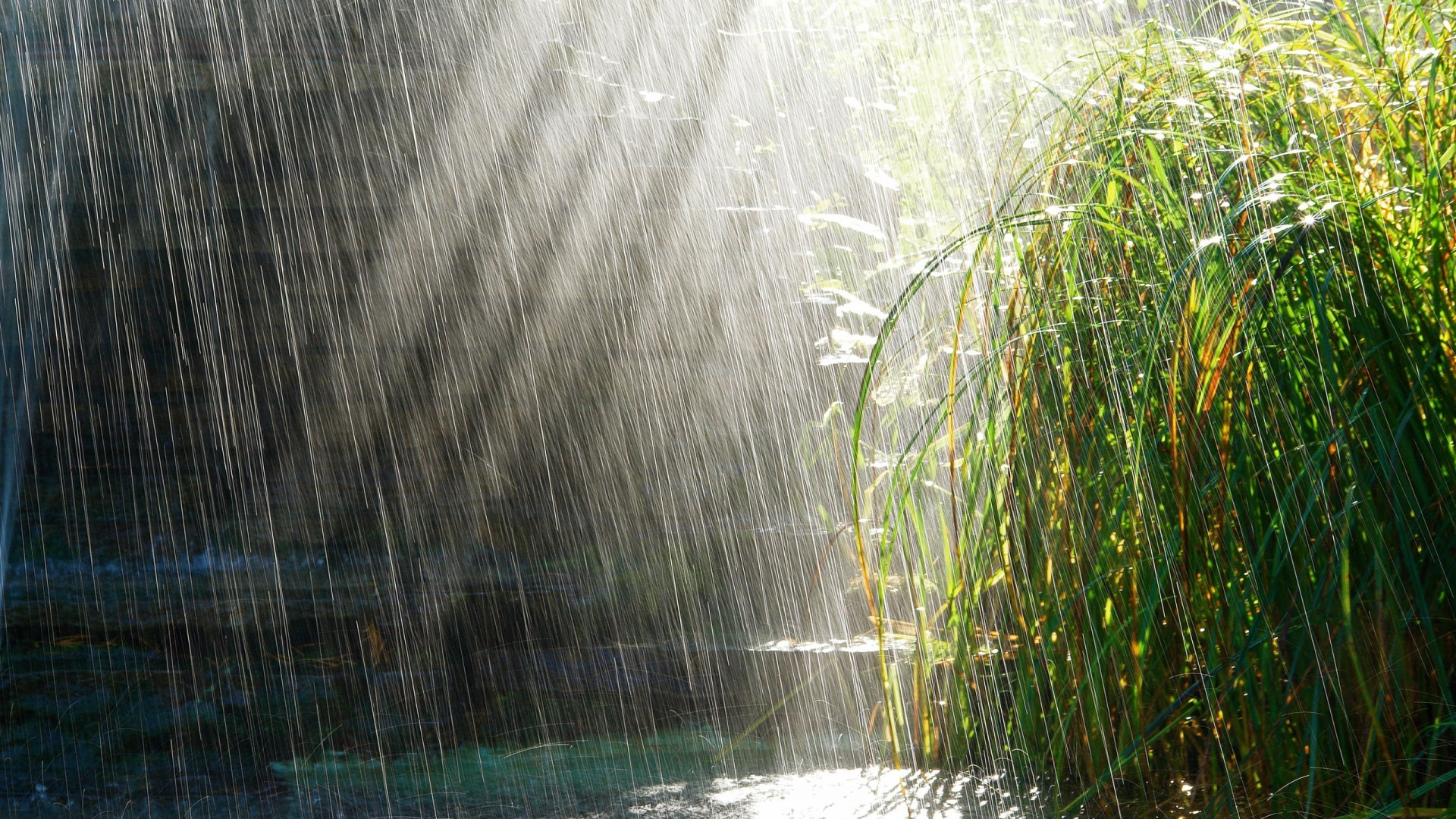 Heavy Rain in Sunny Weather 365.56 Kb