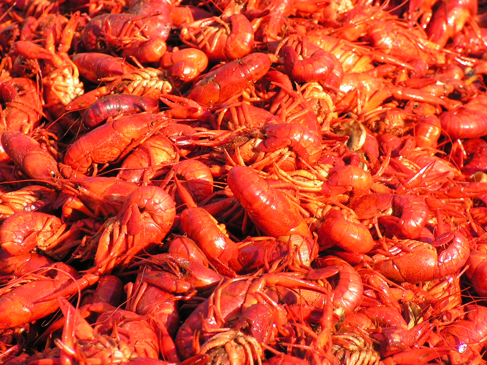 Cooked Crawfish Picture
