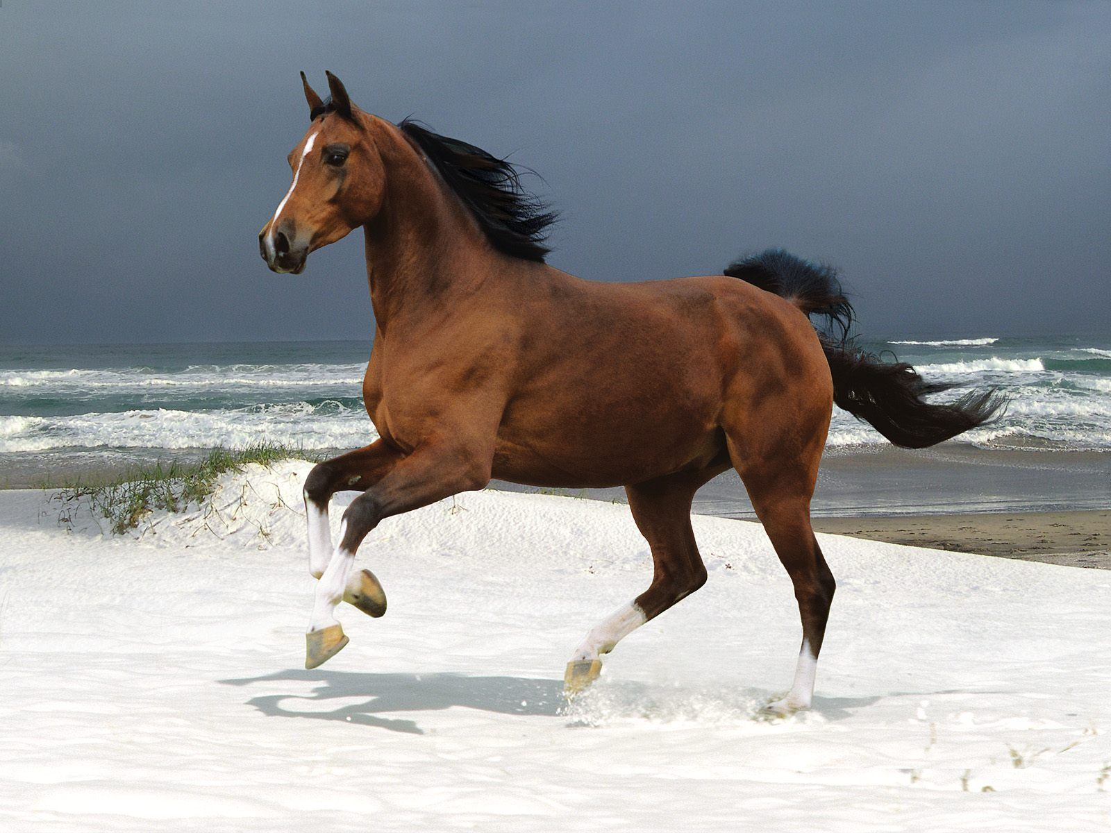 Beautiful Horse on a Beach 414.93 Kb