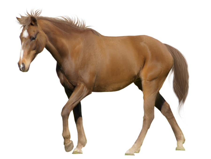 Brown Horse Image