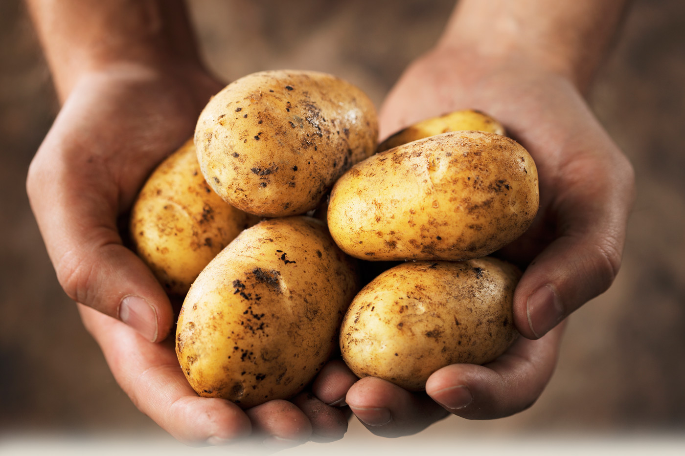 Potato Bunch in the Hands 147.42 Kb