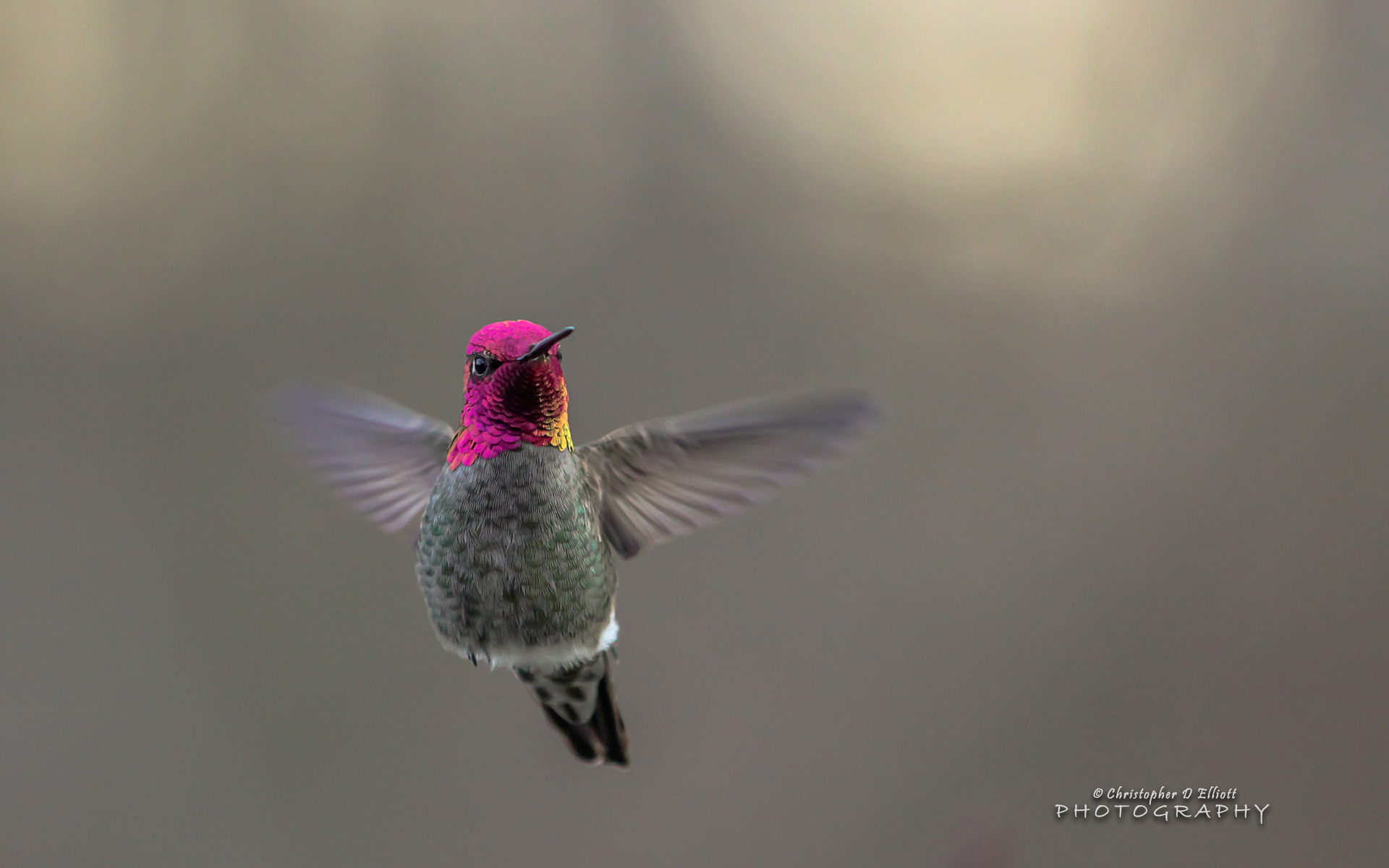 Flying Hummingbird 415.64 Kb