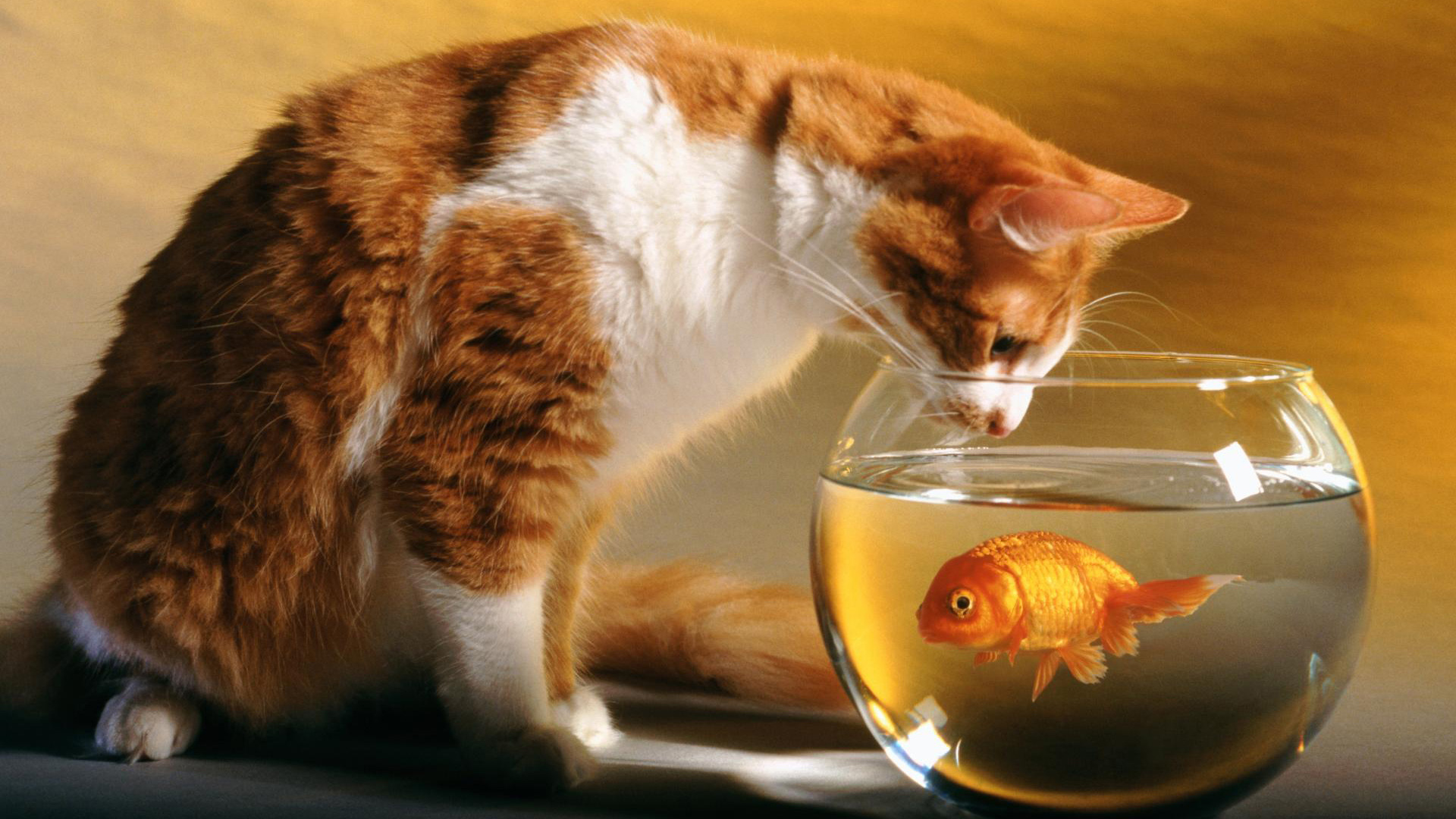 Cat and Fish 518.03 Kb