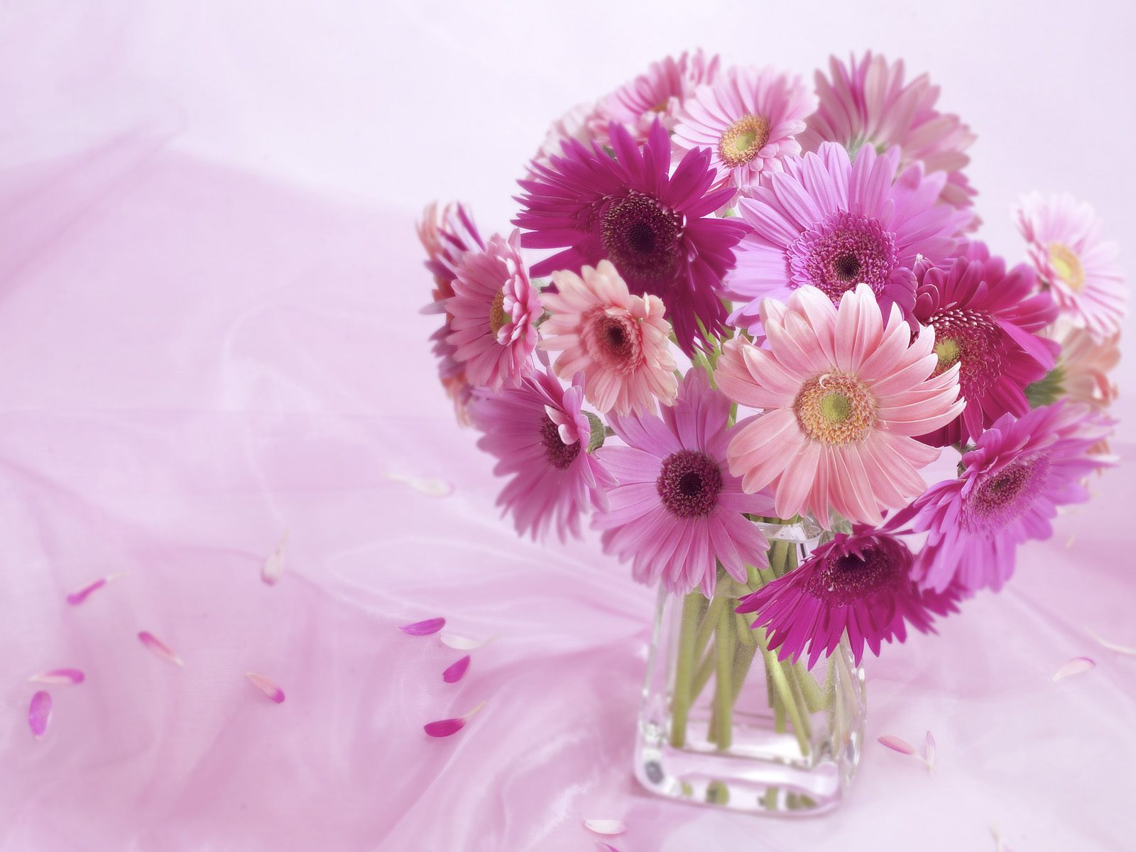 Gerbera Daisy Arrangement 132.63 Kb