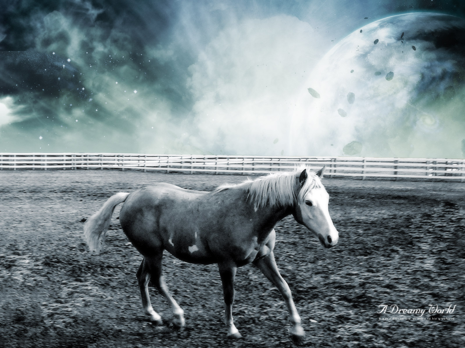 Dreamy Horse World