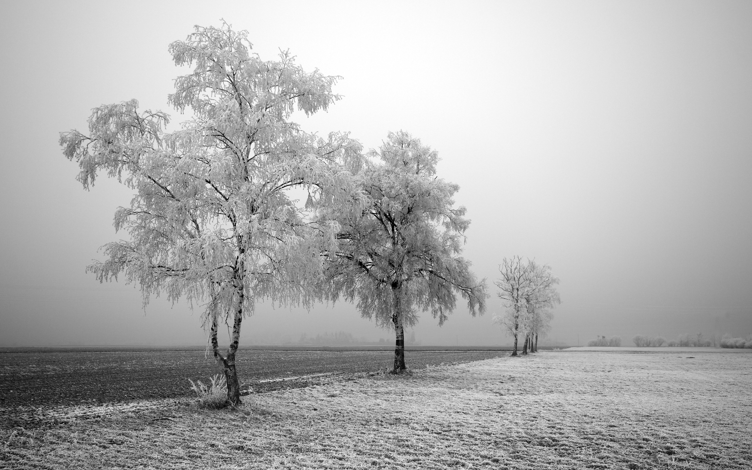 Frozen Trees 394.15 Kb