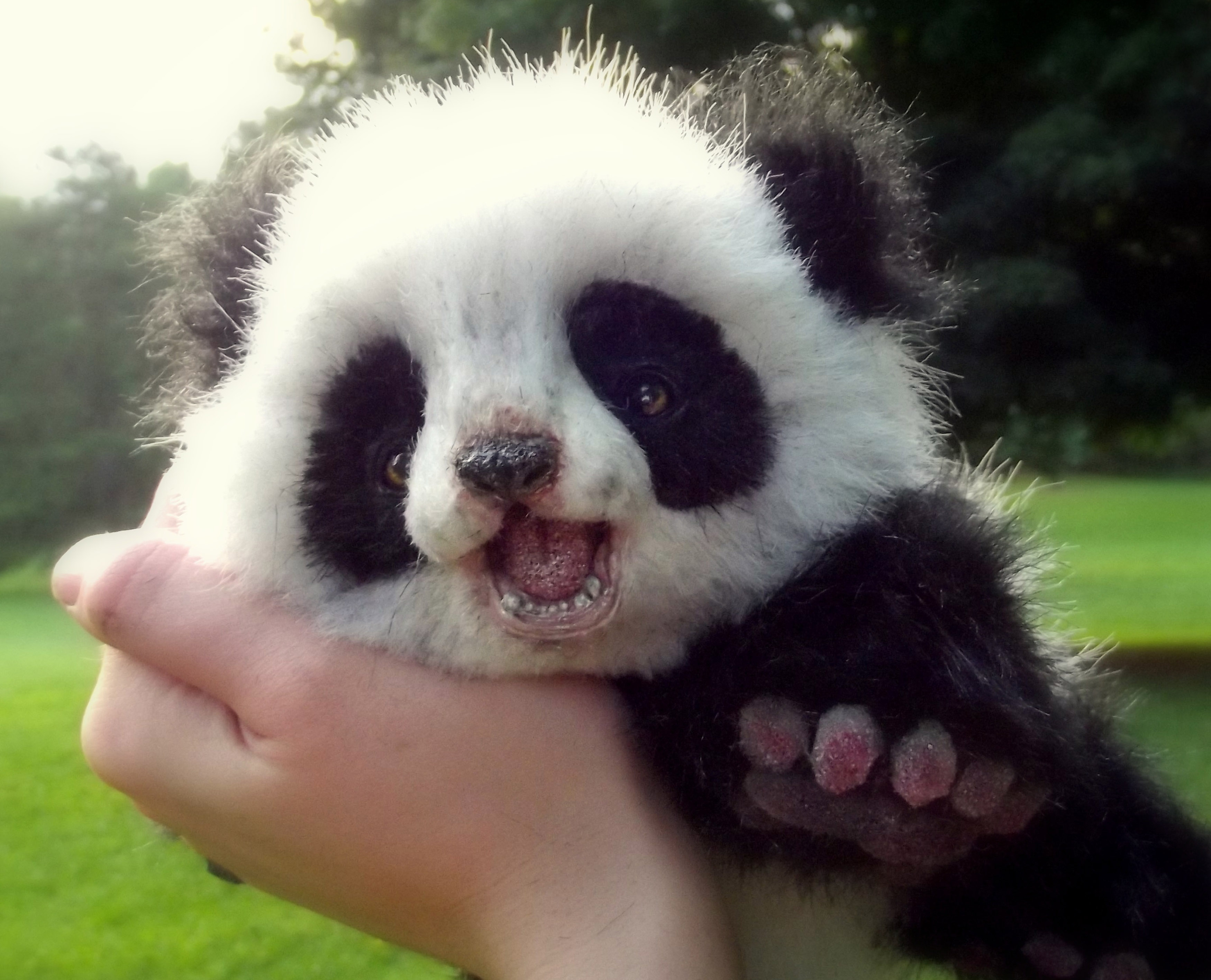 Pictures Of Animals With A Cute Small Panda 4234438
