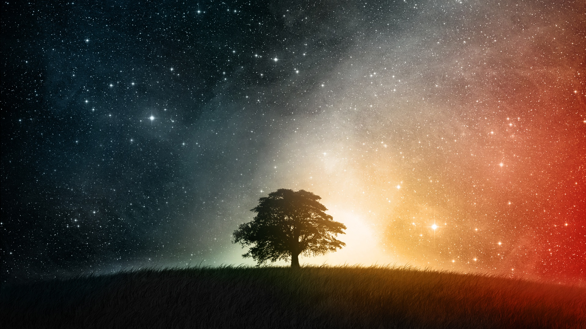 Starry Sky and a Tree Wallpaper Full HD 856.64 Kb
