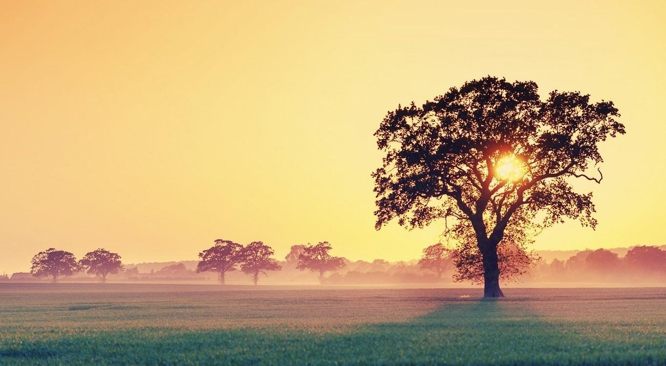 Sun In A Tree Wallpaper Full Hd 4235781 1363x749 All For