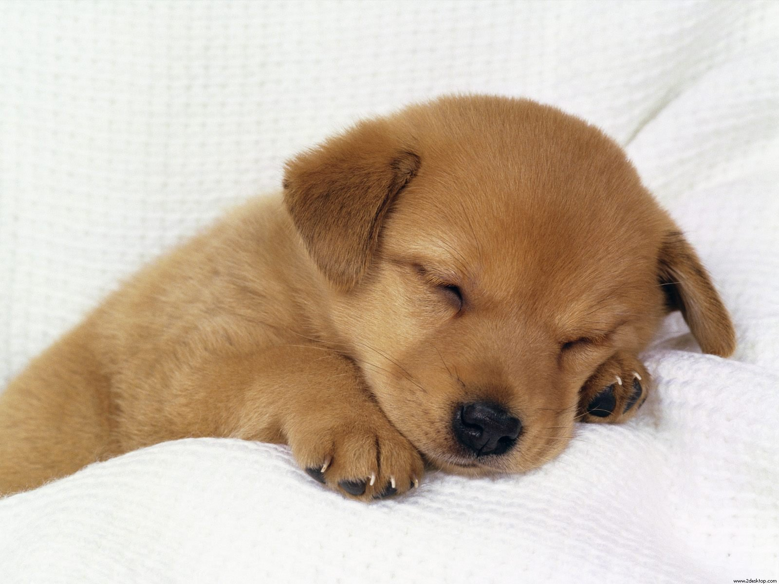 Pictures Of Puppies Sleeping 156.34 Kb