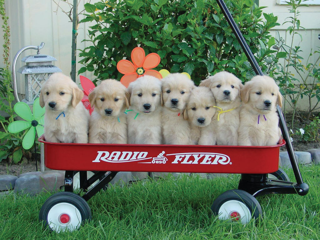 Pictures Of Puppies in a Cart 156.34 Kb