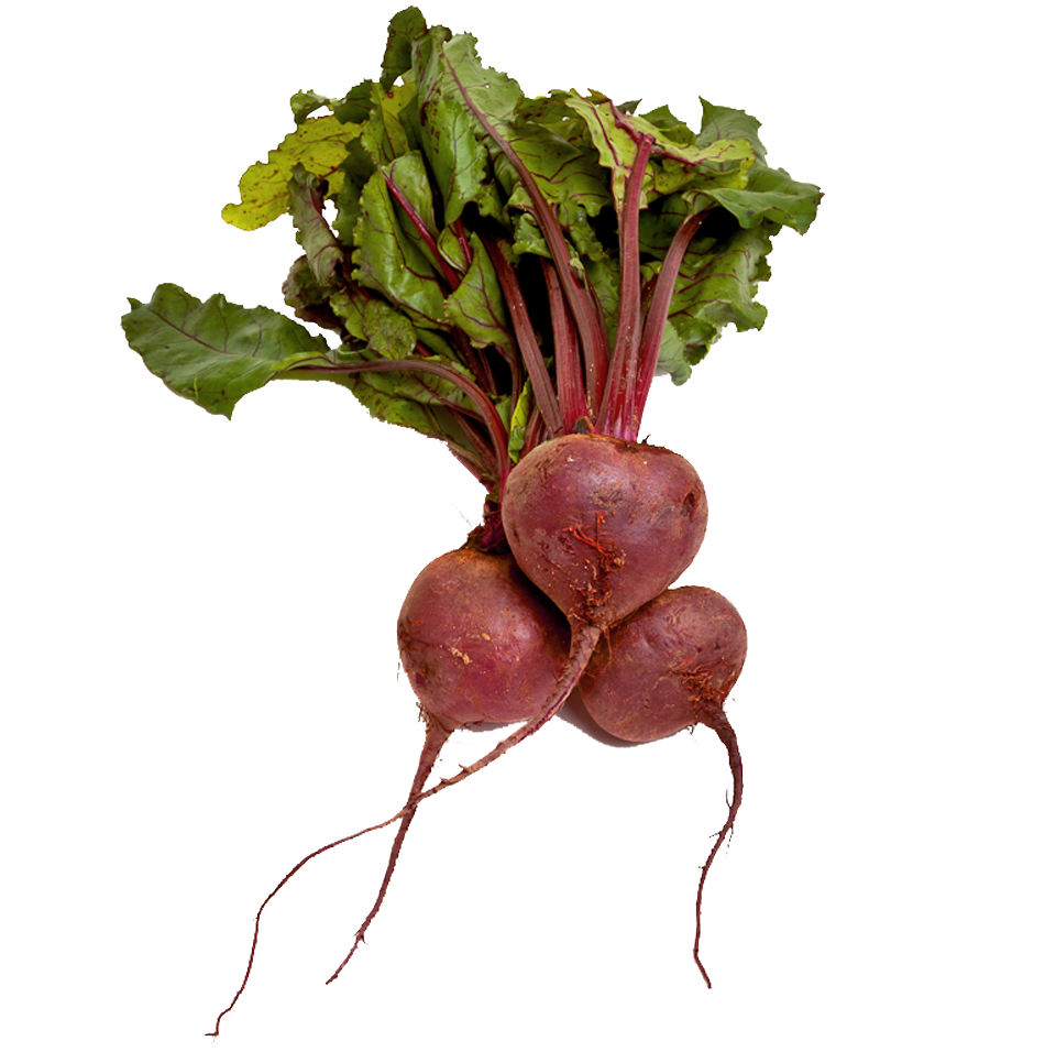 Beet Medicinal Plant #4239332, 960x956 | All For Desktop