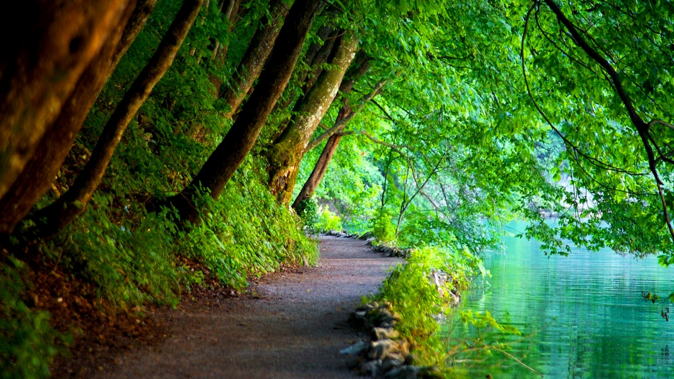 Green Trees, Nature by the River 1108.36 Kb