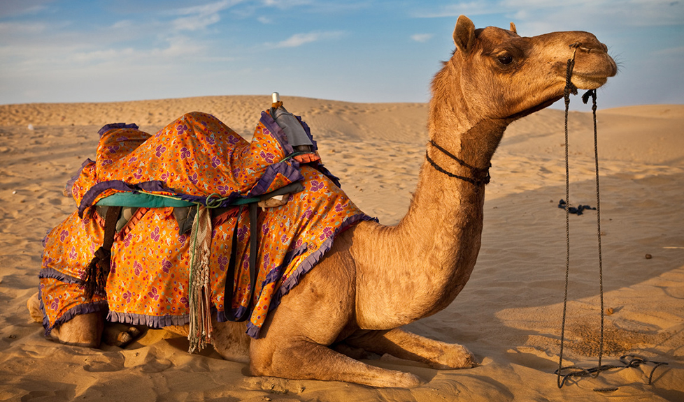 Ride on an Equipped Camel