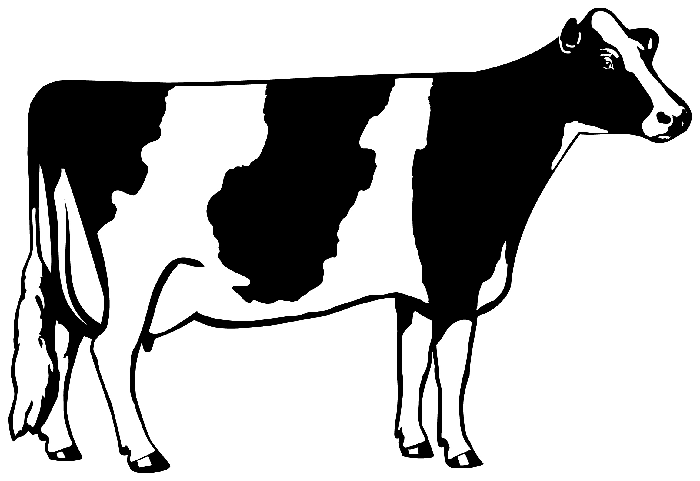 Simple Cow Pattern