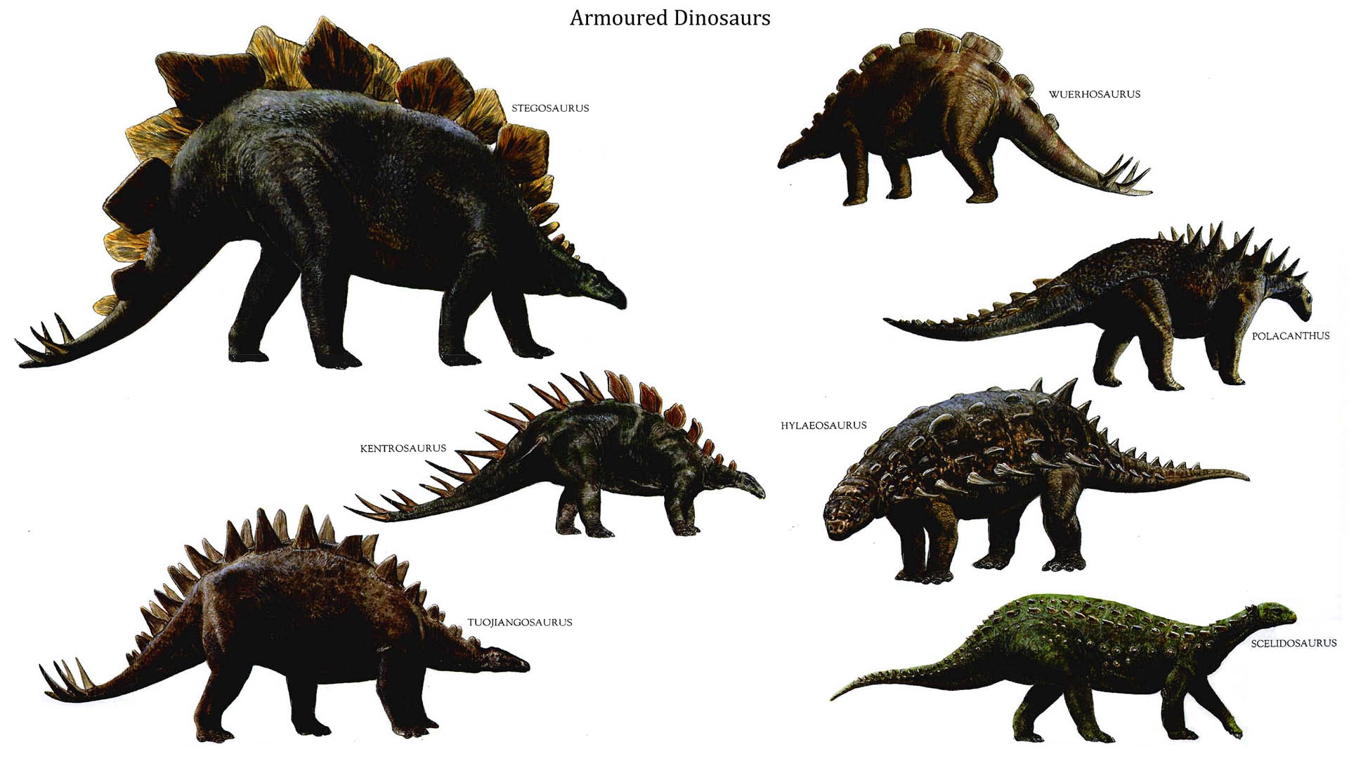 Armoured Dinosaurs Types 300.04 Kb