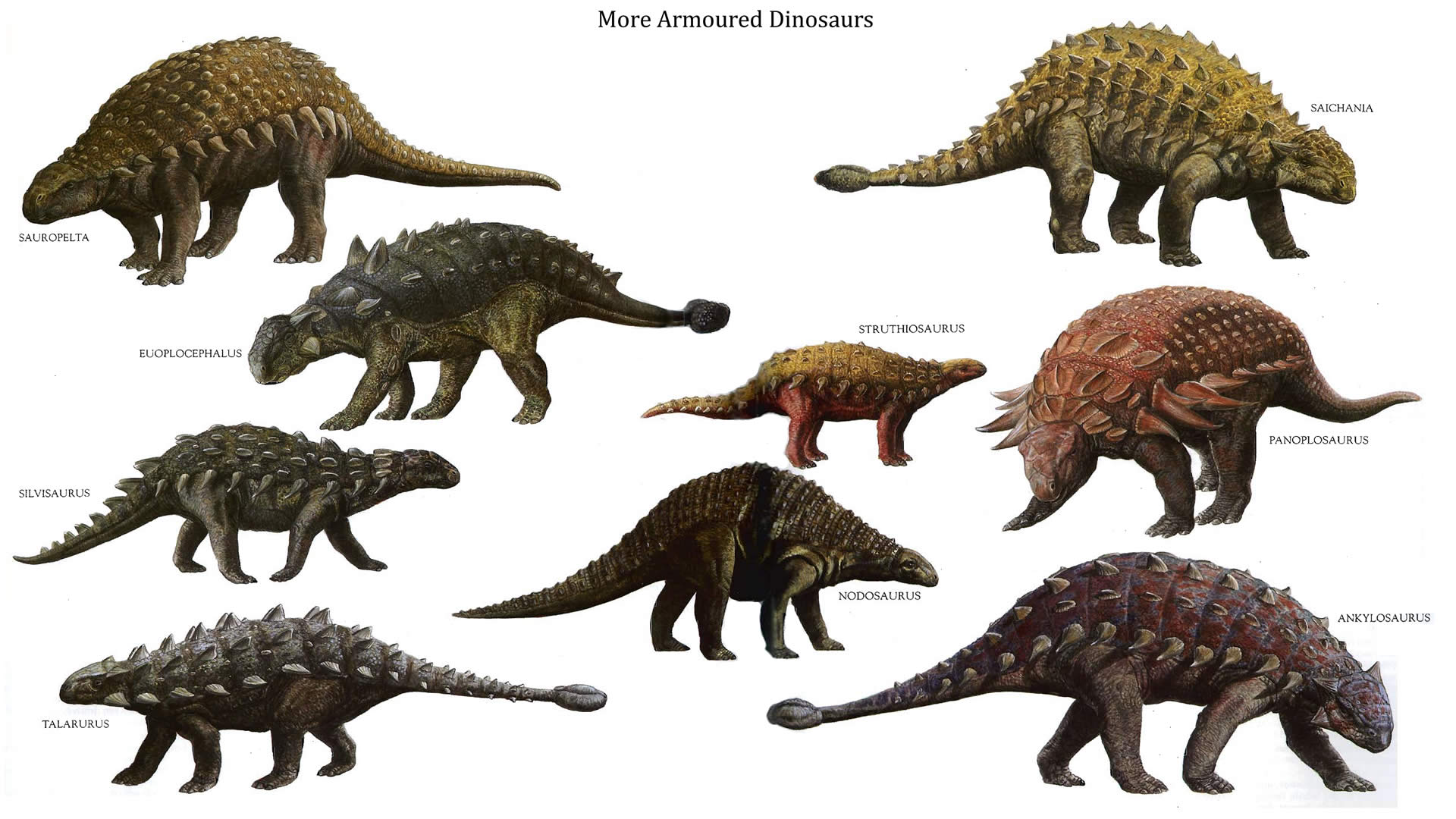 More Armoured Dinosaurs Kinds 300.04 Kb