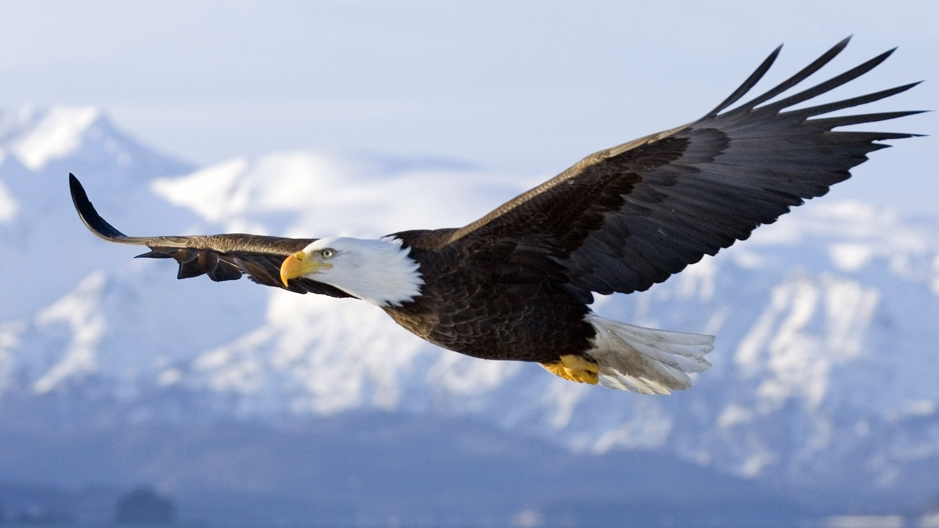 Eagle Flying in the Mountains 746.75 Kb
