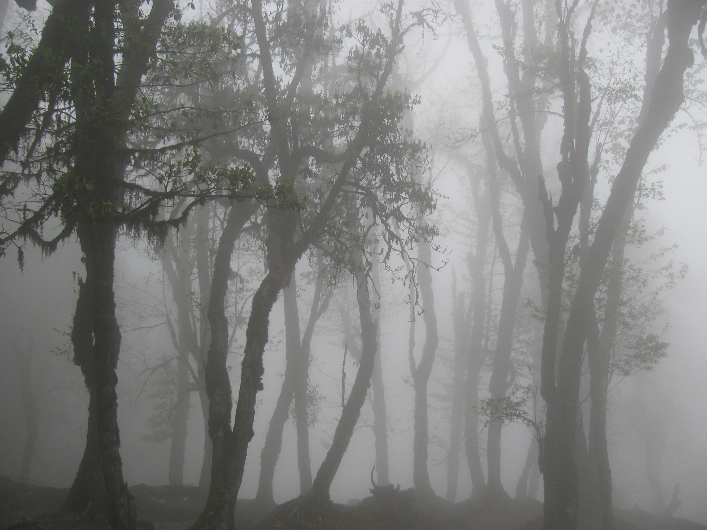 Heavy Fog in the Forest