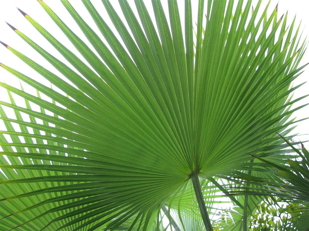 Palm Tree Branches and Leaves