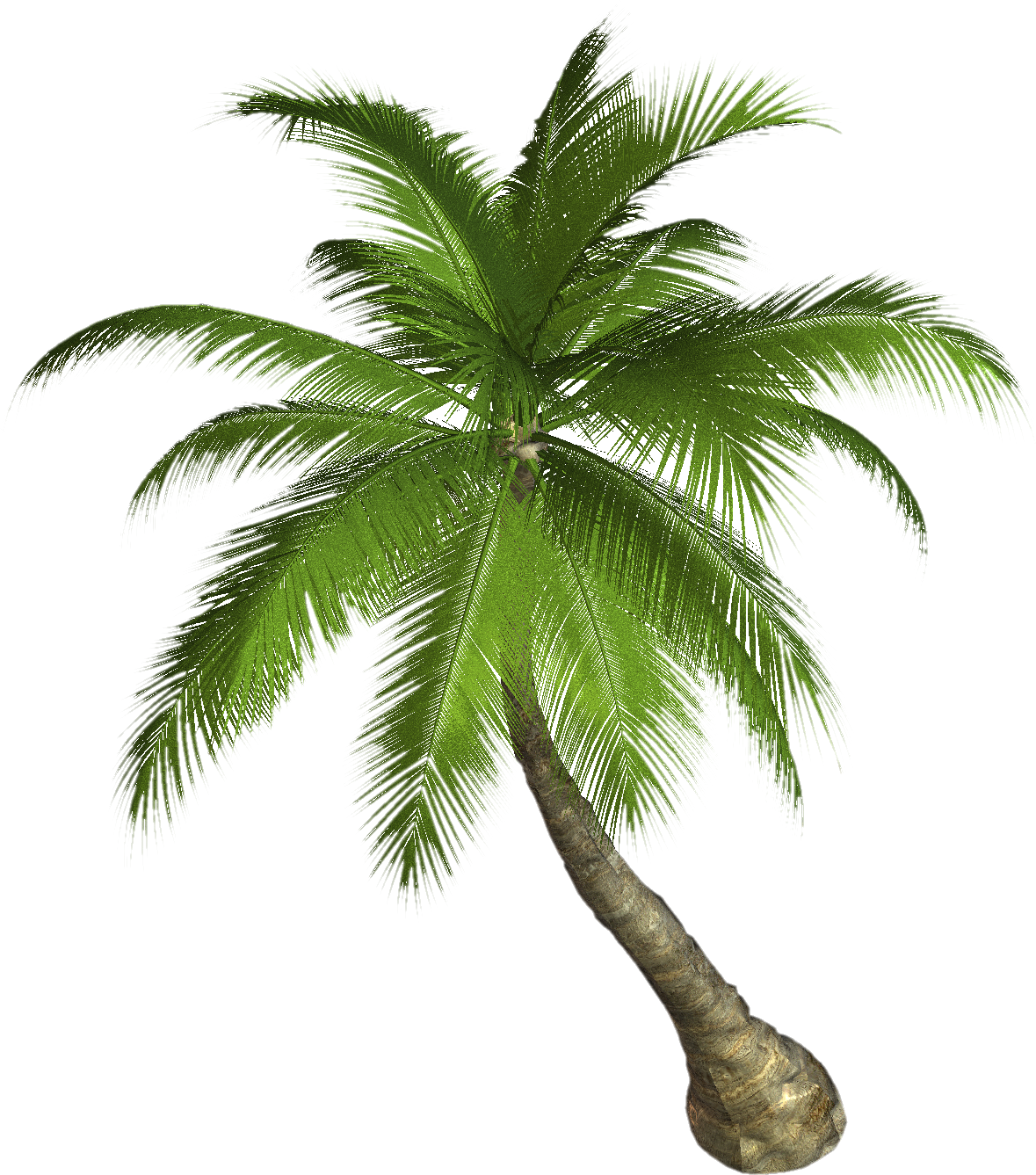 Palm Tree Greenery
