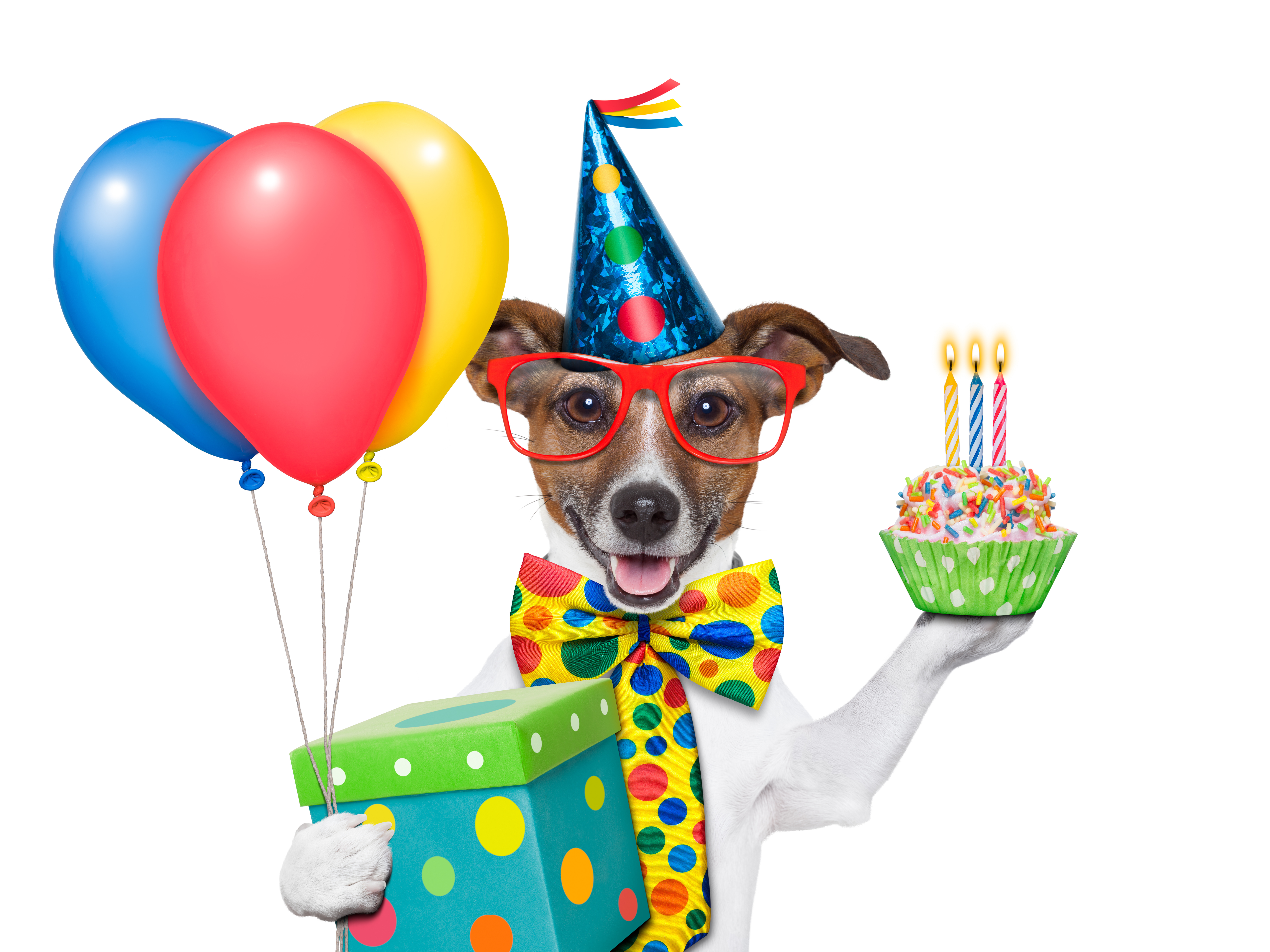 Dog's Birthday, Present and Balloons